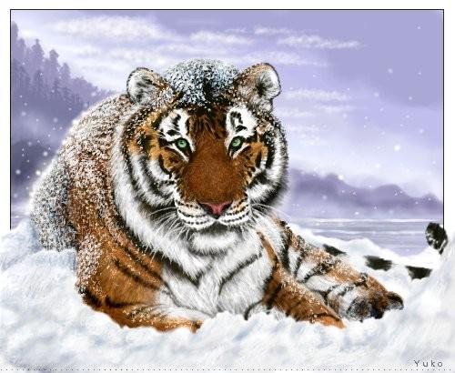 White siberian tiger in snow - photo#17